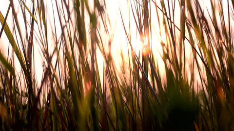 Grass at sunset. Sunset in the meadow Footage