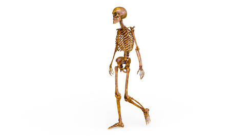 Skeleton CG動画