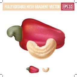 Cashew on white background. Vector illustration Vector