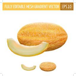 Melon on white background. Vector illustration Vector