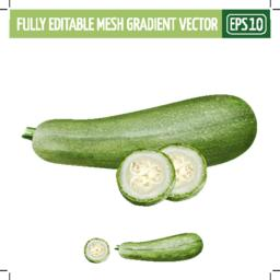 Zucchini on white background. Vector illustration Vector