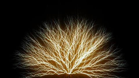 Tree form lighting type2 Animation