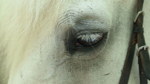 Horse eye close-up Footage