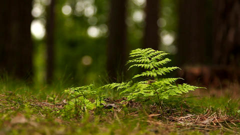 Beautiful green fern in the forest after rain Footage
