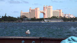 Bahamas Nassau seagull & the Atlantis luxury hotel with its giant arch Archivo