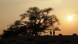 Tree of life, Bahrain. Timelapse Filmmaterial
