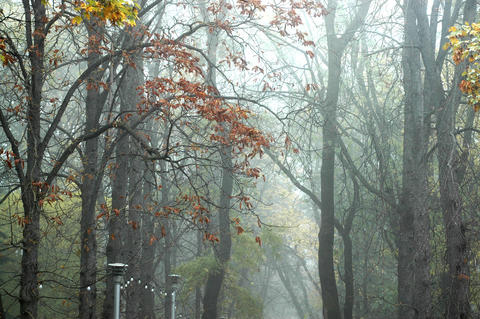 Beautiful trees in autumn Park during fog Photo