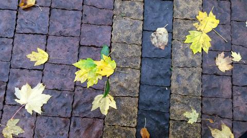 Beautiful autumn leaf lying on the wet paving slab Fotografía