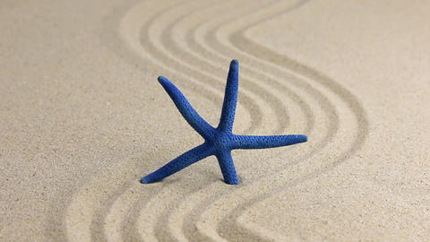 Approximation of starfish lying on the sand Archivo