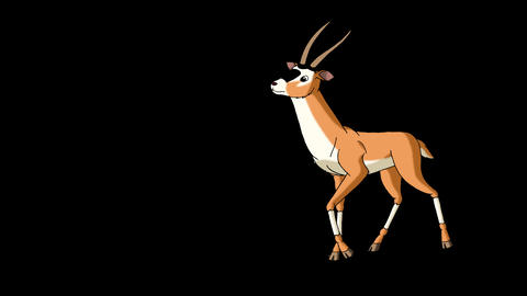 Antelope Gazelle Comes and Stops Alpha Animation