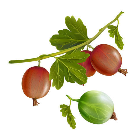 Gooseberries on white background Fotografía