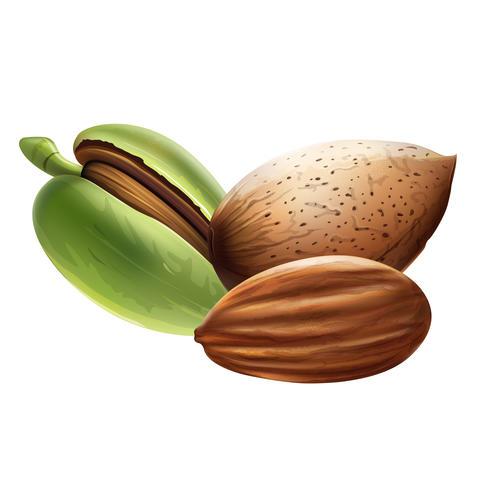 Almond on white background Fotografía