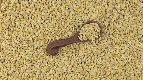 Rotation of a clay spoon with barley lying on a heap of barley grains. Food Footage