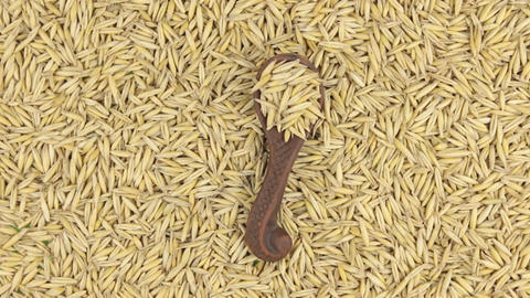 Rotation of a clay spoon with oat lying on a heap of oat grains. Food Footage