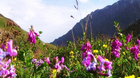 Violet Flowers Footage