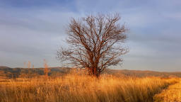View of a small tree across the field during golden hour Image