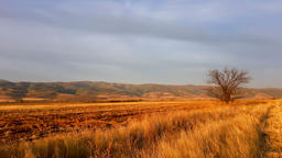 View of a small tree across the field during golden hour 영상물