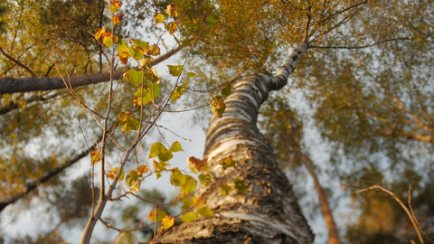 Looking Up At Tree Canopy On Sunny Day Stock Video Footage