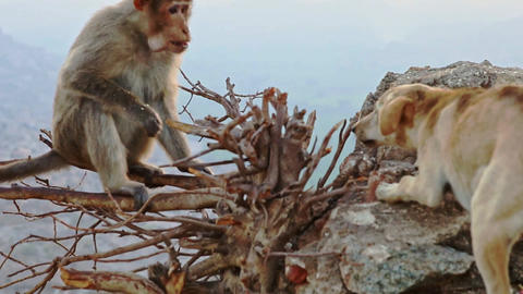 Funny Monkey Sits on Bare Branches and Fights with Dog Footage