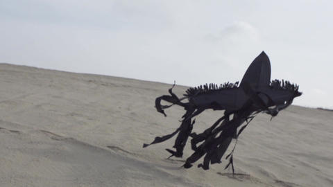Black Kite Lands on Sand Footage