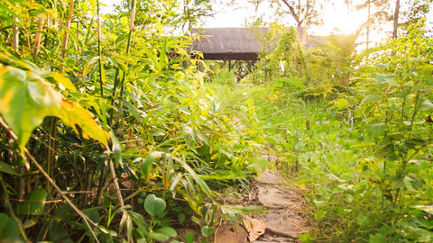 Camera Moves from Stone Path among Plants to Shed with Reed Roof Footage