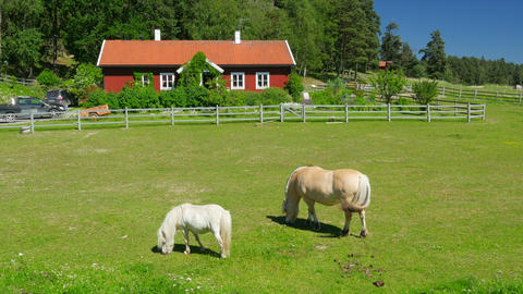 horse grazing on grass, scandinavian countryside village near stockholm Footage