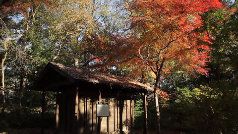 Japanese traditional warehouse in autumn / Hiegura - Tilt Up/Fix Footage