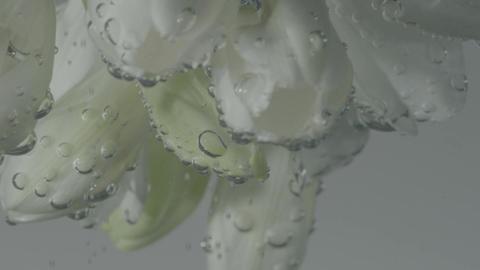 White Flower Buds Spinning Underwater Footage