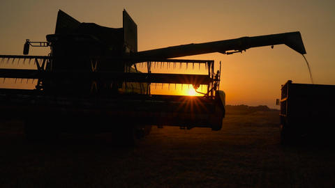 Silhouette of combine harvester pours out wheat into the truck at sunset Footage