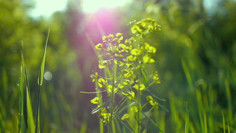 juicy green grass macro sun shines through the leaves of the grass beautiful Live Action
