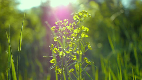 juicy green grass macro sun shines through the leaves of the grass beautiful Footage
