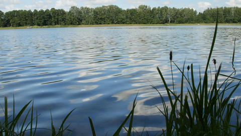 Nature with a calm surface of clear lake water and green plants Footage