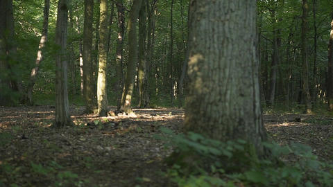 Girl Runs in the Morning Woods Footage