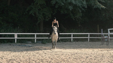 Graceful Horse. Horse Riding in the Summer Forest Footage