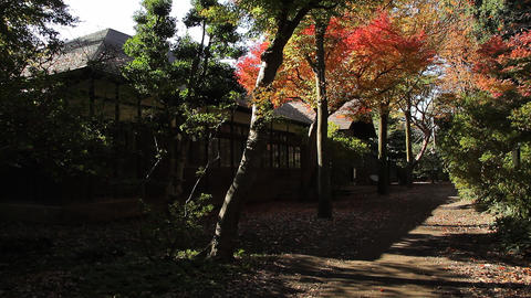 Autumn Leaves / Fall Colors / Path through the Park - Fix ビデオ