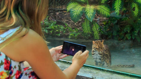 Backside Blond Girl Takes Photo Of Wild Cat In Zoo Window stock footage