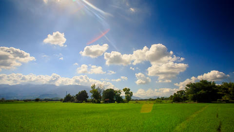 View of Rice Field by Tropical Trees against Blue Cloudy Sky Footage