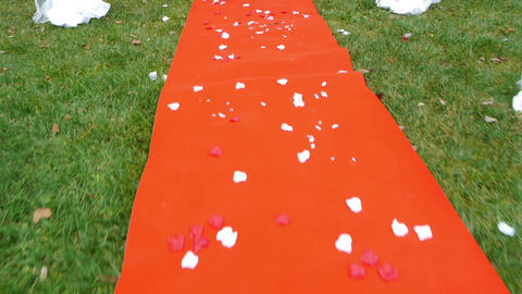 Red carpet covered with rose petals placed in front of the grooms who will come  Footage