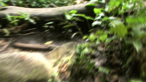Walking through the jungle Footage