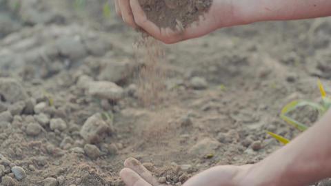 AGRICULTURE. Farmer examining soil Footage