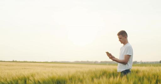 Agiculture. Modern farmer using digital tablet. Farming background Footage