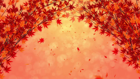 Autumn Leaves Falling on Glittery Background, Maple Tree, Loop Animation Animation