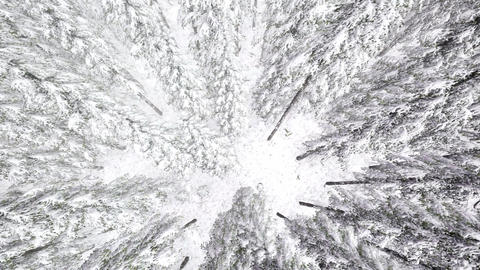 4K. Flight above winter forest on the north, aerial view Footage