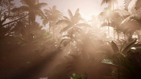 4k Dolly shot of a lush tropical jungle in a sun with coconuts, palm trees Footage