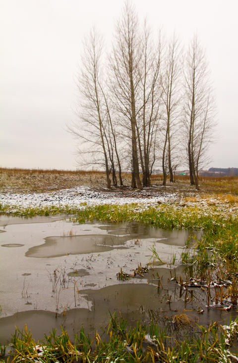 Late autumn. A few aspen on the shore of an ice-covered pond フォト