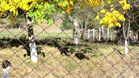 Girl who goes on a road located behind a woven wire fence bordered with trees le Footage