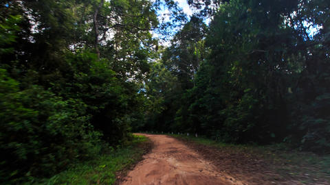 Camera Moves along Shadow Ground Road in Tropical Forest Footage