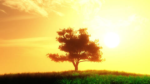 4 K Lonely Tree on Summer Field in the Sunset Sunrise 3 stylized Animation
