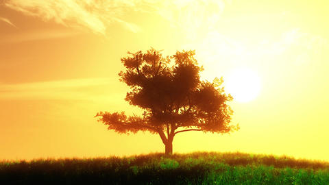 4 K Lonely Tree on Summer Field in the Sunset Sunrise 6 stylized Animation