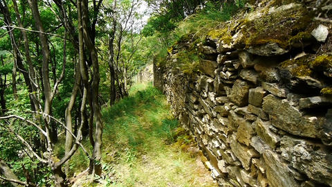 Old walls by citadel discovered in a deciduous forest 4 Footage